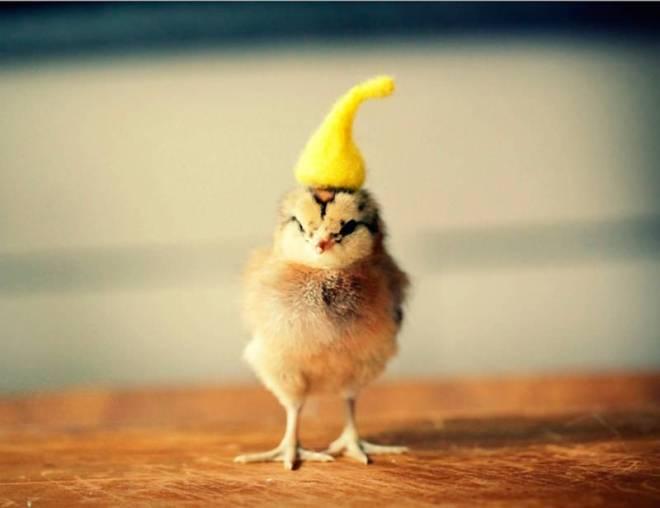 hot chicks photo