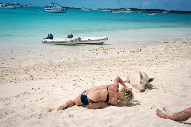 Багамские острова, где живут свиньи