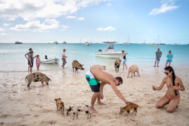 Когда свиньи вместо дельфинов. Багамы