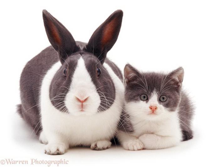 cute-matching-pets-warren-photographic-4-57e934f0b4adc__880