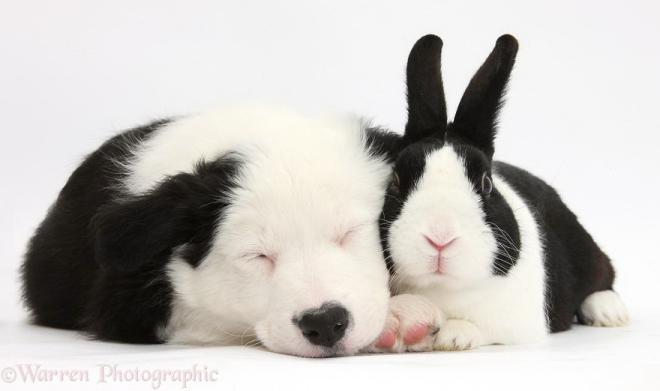 cute-matching-pets-warren-photographic-40-57e9354bd07c0__880